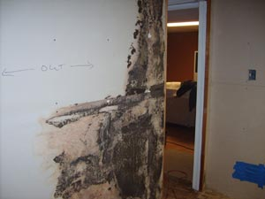 Mold Damage Repair in Atlanta
